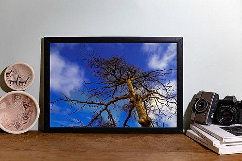 Árvore seca I