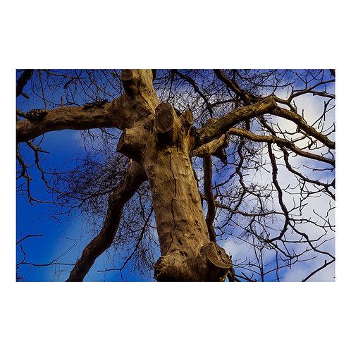 Árvore seca 2