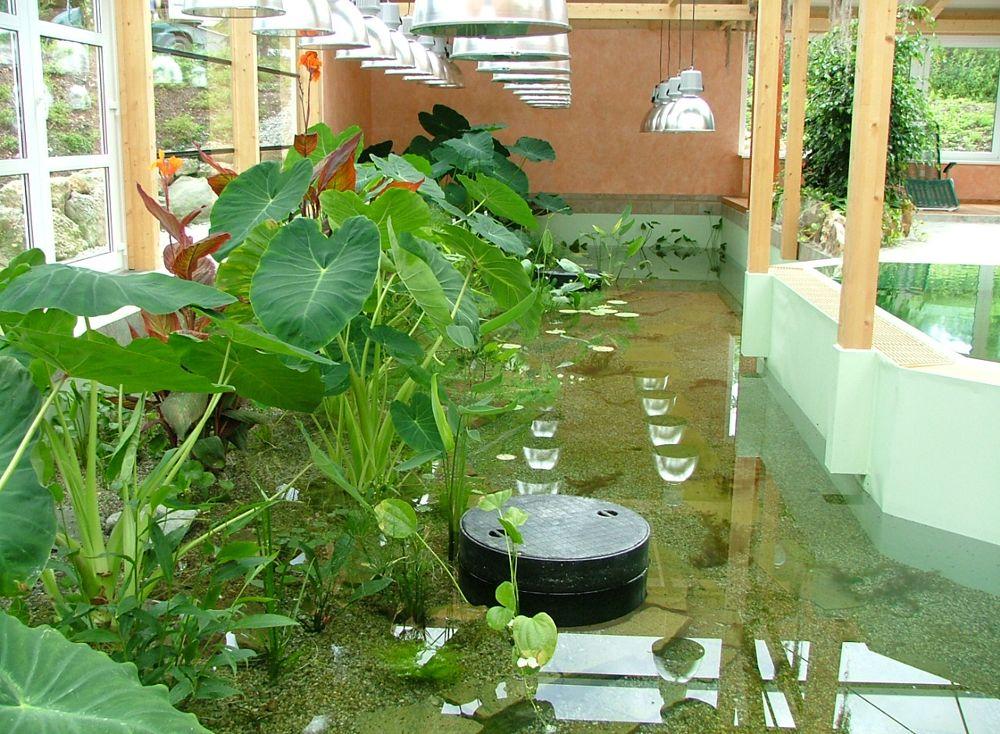 Купальный пруд в здании