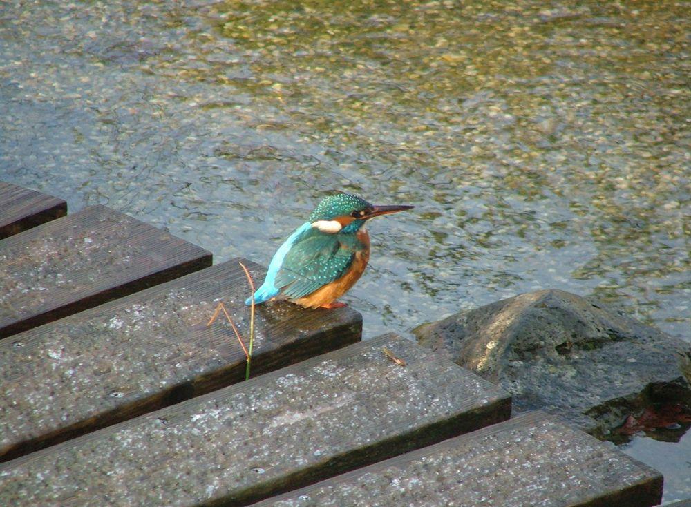 Купальный пруд натуральная вода