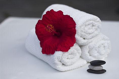 plant-white-flower-petal-red-relax-86983