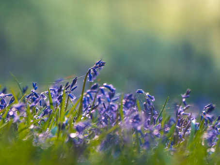 L'heure bleue en forêt (3 propositions)