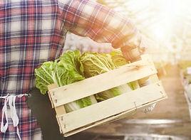 Lettuce Delivery.jpg