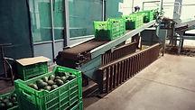Loading Avocado.jpg