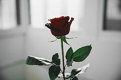 single-red-rose-in-white-light.jpg
