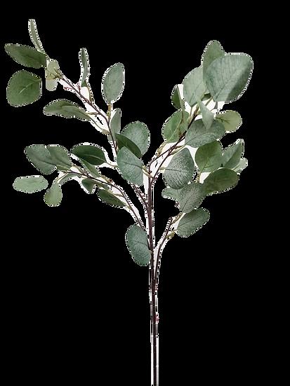 3 Stems of Eucalyptus Sprays