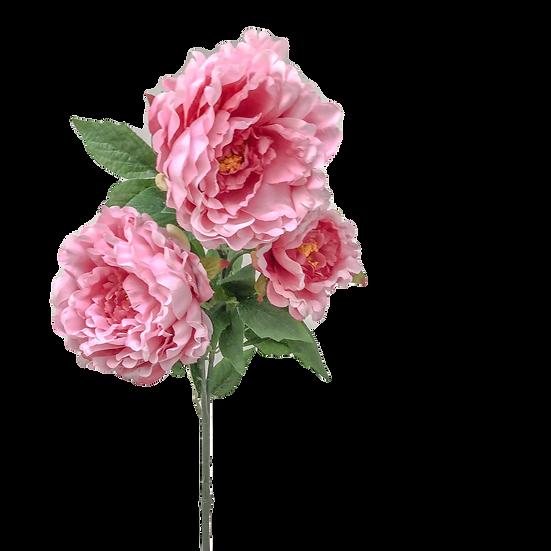 Pink Blush Peonies x 6