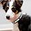 Thumbnail: Jeweled Black Personalized Pet Collar