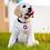 Thumbnail: Glitter Dog Tag