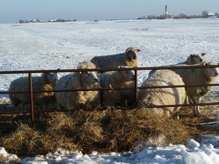Pellworm im Winter