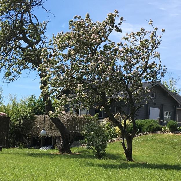 Das Saunahaus, versteckt hinter Apfelbäumen