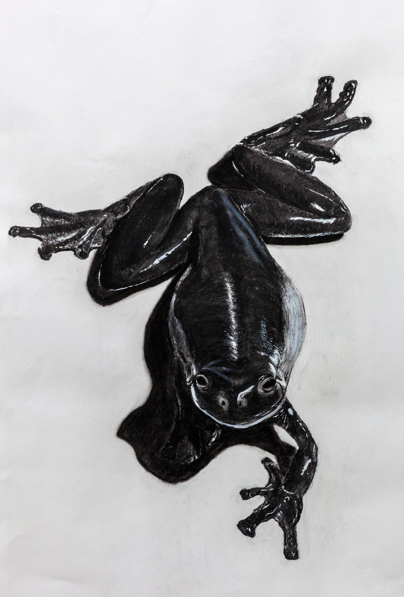 Frog Noir
