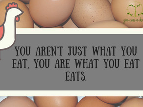 Freeloading Hens have me thinking...