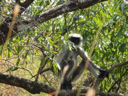 Monkeys are our neighbors
