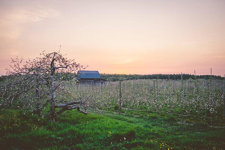Orchard .jpg