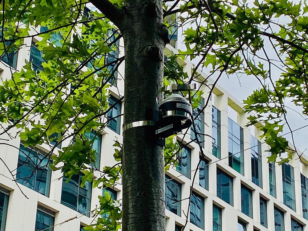 dendrometers on Melbourne street trees