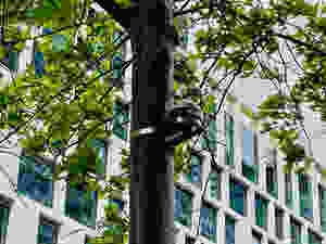 dendrometers on Melbourne street trees