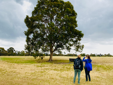 Trees that answer fan mail and other tales from the Australian School of Urban Forestry, Part I