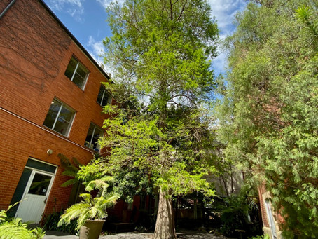 People want action on rising temperatures in Australian cities. Can urban trees help?