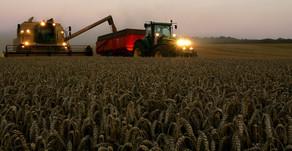 La pandémie Covid-19 : quelles leçons à tirer pour l'emploi dans le secteur agricole ?