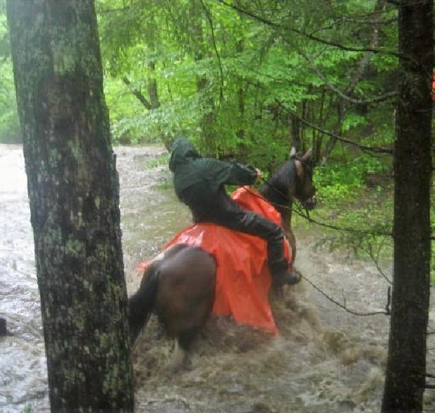 horse big creek.jpg