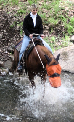 horse riding lessons_edited