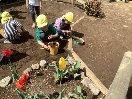 園庭で生まれた植物や生き物との遊び