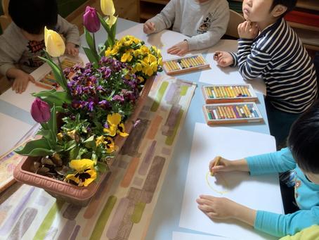 春の訪れ🌷