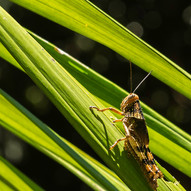 Cicada in the sun by Barry Wright