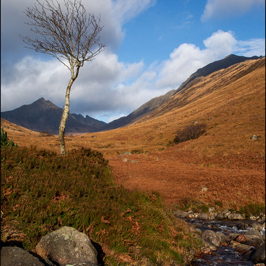 Lonely Tree by M.Anderson