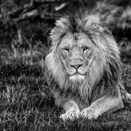 Son Of Zulu by Stuart Glen