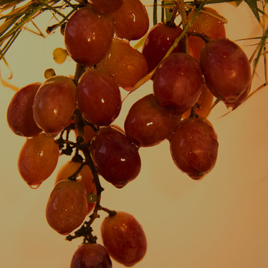 Fresh from the vine by G.Stewart