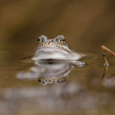 Frog by Ian Milne
