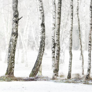 Winter Bare by M.Farrance 2nd=