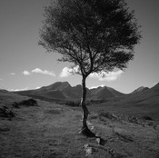 Lonely Tree by G.Robertson 3rd