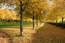Autumnal Canopy by David Irvine