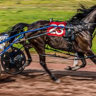 Harness Racer by Stuart Glen