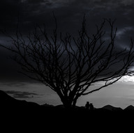 Spooky tree by Graham Robertson
