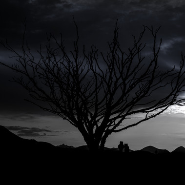 Spooky tree by G.Robertson - 2nd