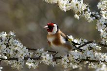 Blossom by Ian Milne