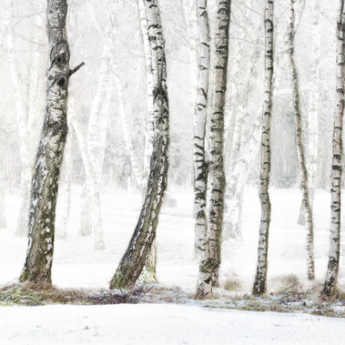 Winter Bare by M.Farrance