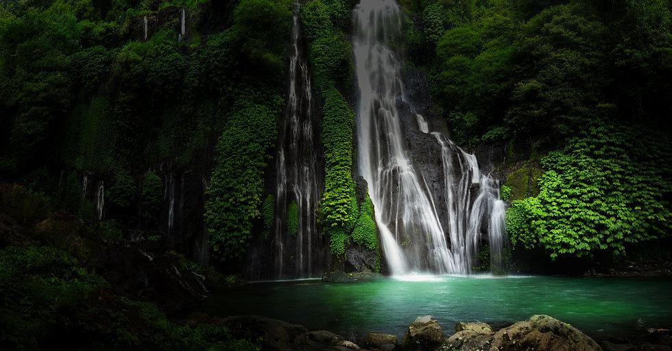 Jungle-background5-compressor.jpeg