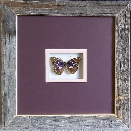 Purple in Barnwood