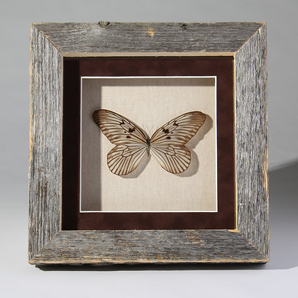 Barnwood Framed Butterfly