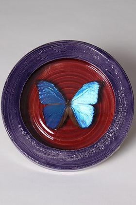 Morpho in pottery frame