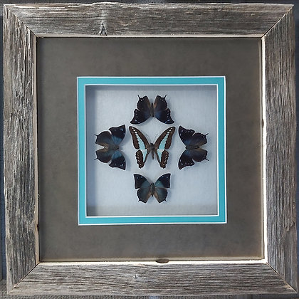 Teal collage in Barnwood
