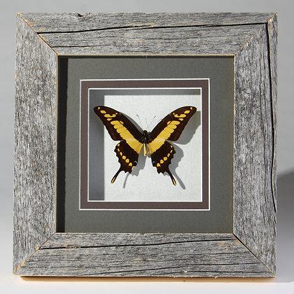 Barnwood Framed Butterfly