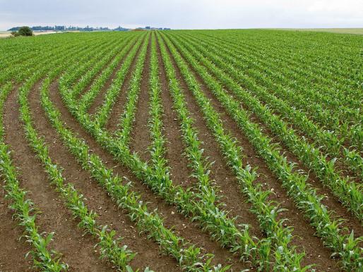 Como a tecnologia pode melhorar a sua plantabilidade?