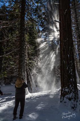 Snowdust, Yosemite National Park