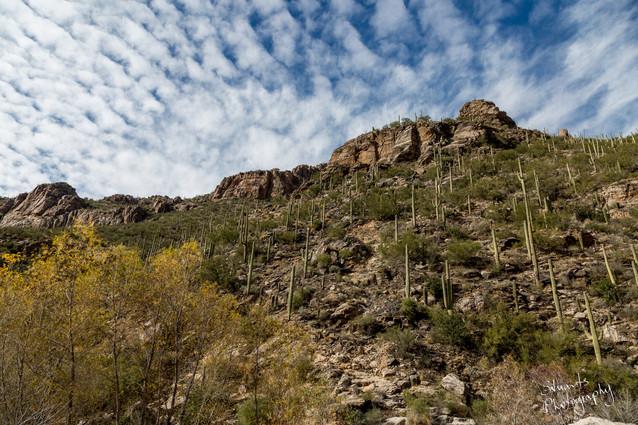 Cactus mountain, Arizona